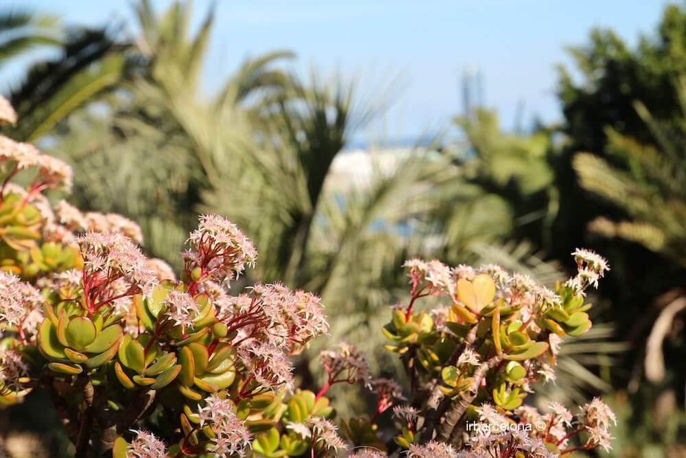jardins Mossèn Costa i Llobera