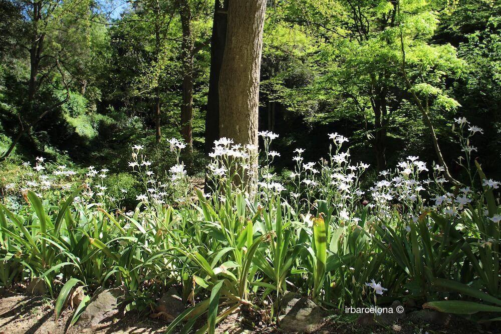 Pflanzen Jardí Botànic Històric
