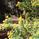 Blumen Parc Laberint Horta