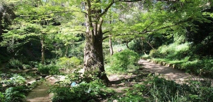 Jhistorische botanische Garten von Barcelona
