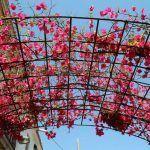 Blumen Carrer d'Aiguafreda