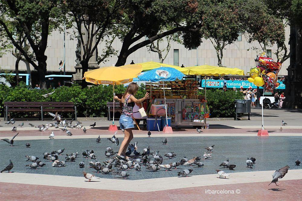 Die Tauben