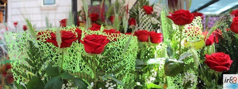Rose des Sant Jordi (Sankt Georg)