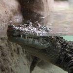 Krokodile Zoo Barcelona