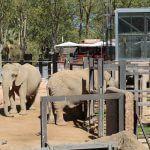 Elefanten Zoo Barcelona