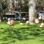 Flamingos Zoo Barcelona