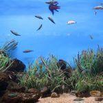 Fisch im Aquarium von Barcelona