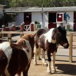 Ponys Zoo Barcelona