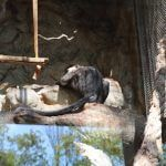 Primate Zoo Barcelona