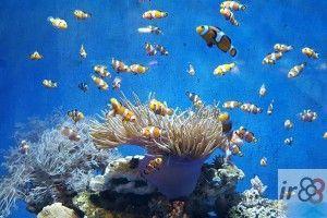 Aquarium Barcelona entradas