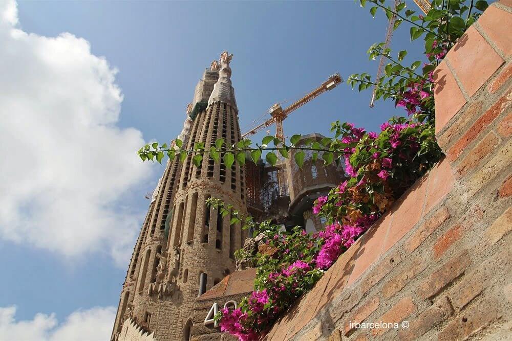 Blumen Sagrada Familia