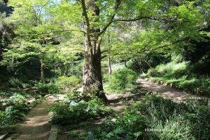 Historische botanische Garten von Barcelona
