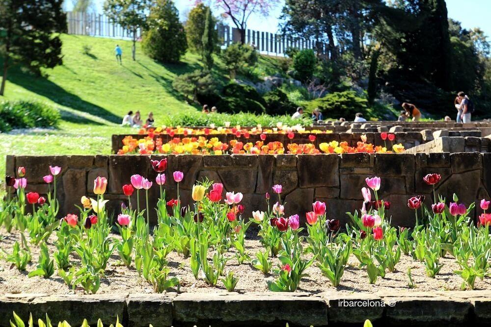 Tulpen Jardins Mossèn Cinto Verdaguer