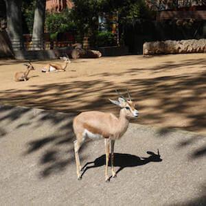 Eintrittskarten Zoo Barcelona
