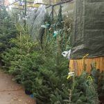 Weihnachtsbäume Weihnachtsmarkt Sagrada Familia