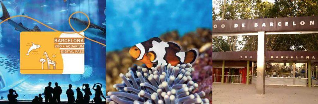 Aquarium + Zoo + Stadttrundfahrt Barcelona